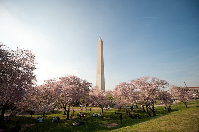 photos-of-cherry-blossom-festival-in-washington- (13)