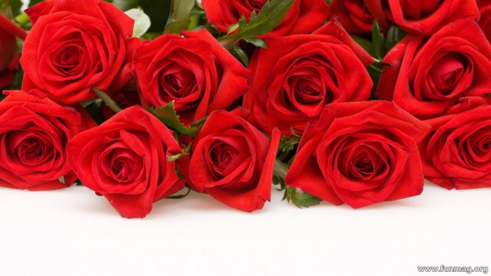 romantic-red-roses-pictures- (1)