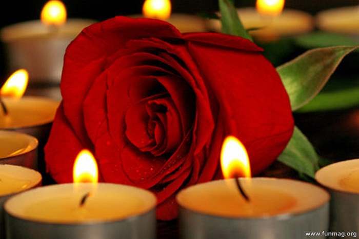 romantic-red-roses-pictures- (11)
