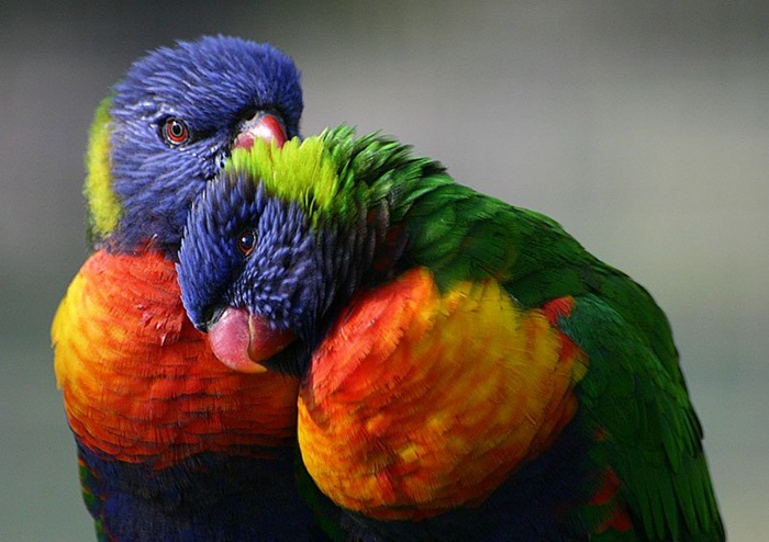 colorful-parrots-26-photos- (3)