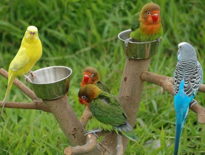 colorful-parrots-26-photos- (5)