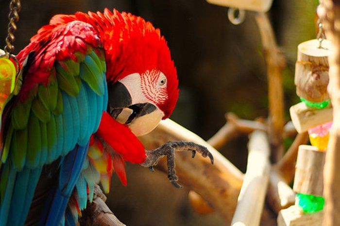 colorful-parrots-26-photos- (20)