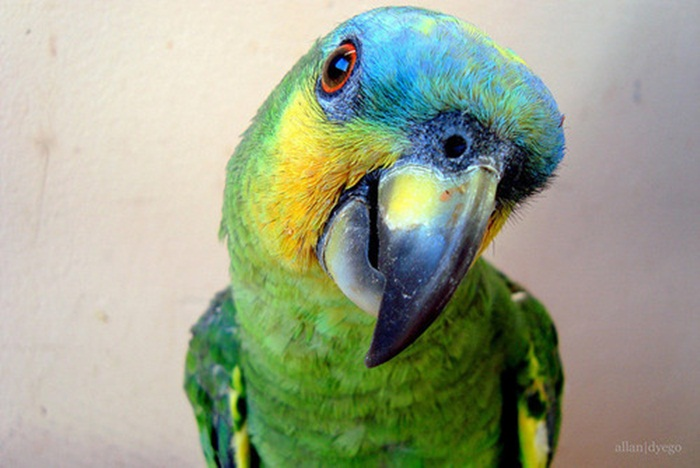 colorful-parrots-26-photos- (21)