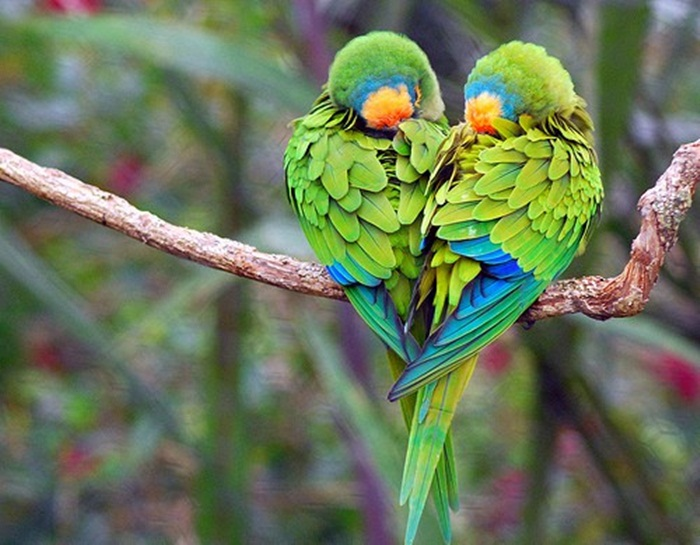 colorful-parrots-26-photos- (24)