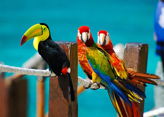 colorful-parrots-26-photos- (25)