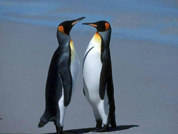 cute-penguin-photos- (1)