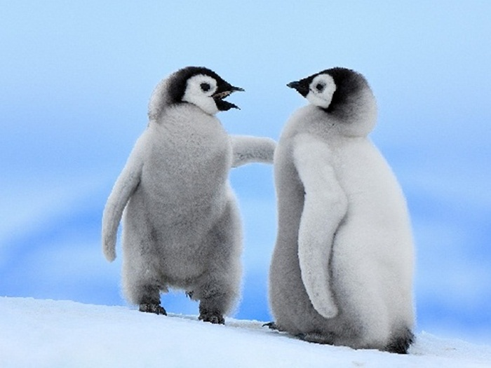 cute-penguin-photos- (7)