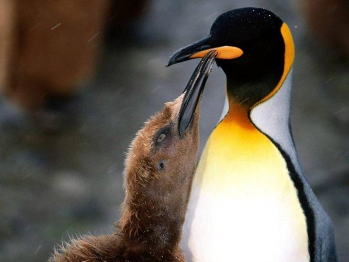 cute-penguin-photos- (22)