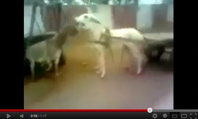 """very-funny-video-of-donkey-love-story"""