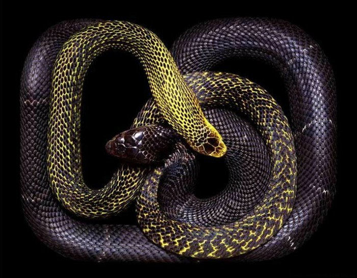 colorful-snakes-16-photos- (12)