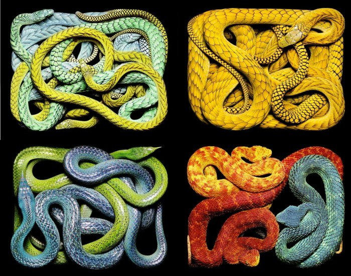 colorful-snakes-16-photos- (9)