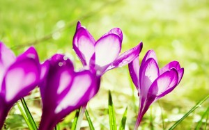 colorful-spring-wallpapers- (13)