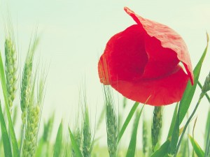 colorful-spring-wallpapers- (18)