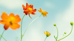 colorful-spring-wallpapers- (2)