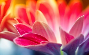 colorful-spring-wallpapers- (5)
