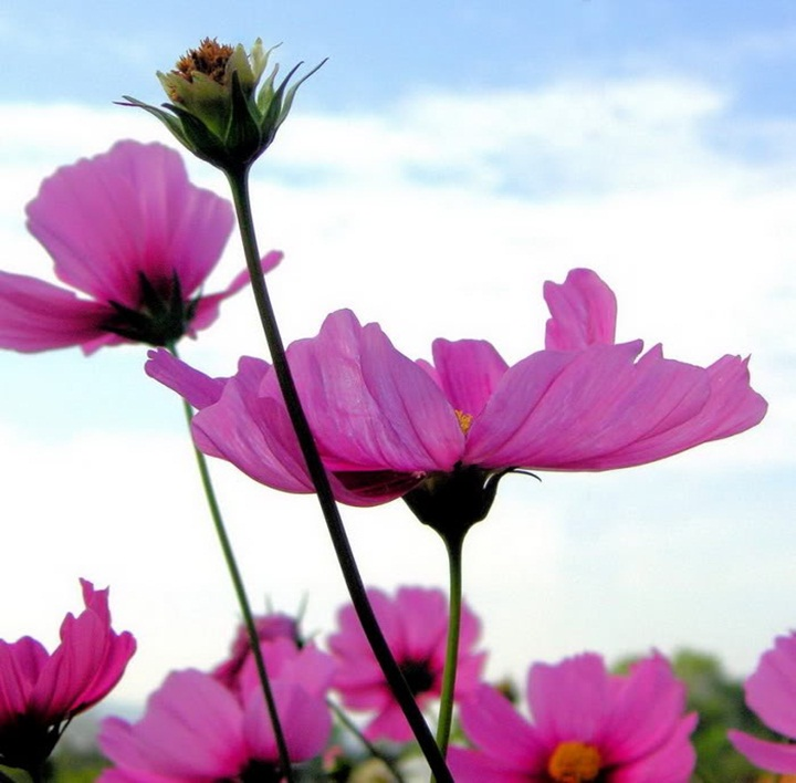 flower-with-sky- (4)