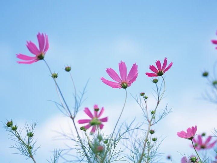 flower-with-sky- (18)