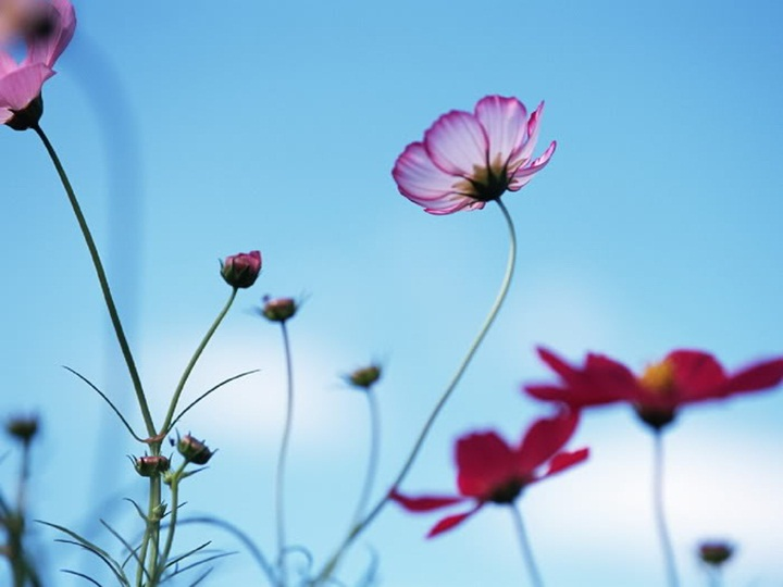 flower-with-sky- (19)