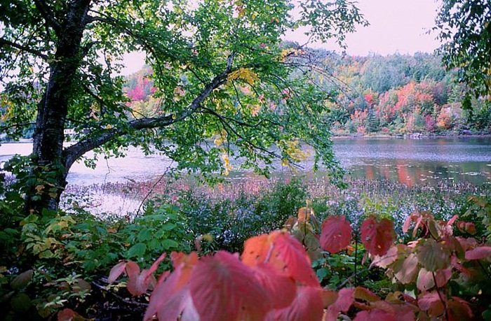 beauty-of-autumn- (25)