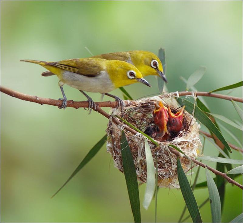 cute-baby-birds- (1)