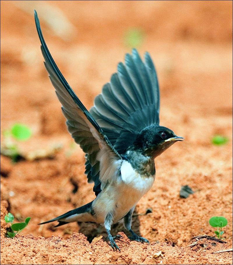 cute-baby-birds- (4)