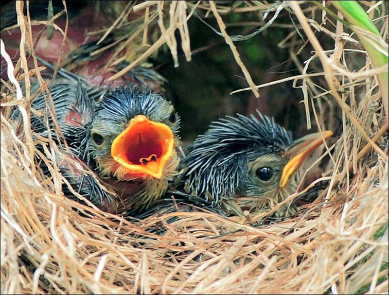 cute-baby-birds- (5)