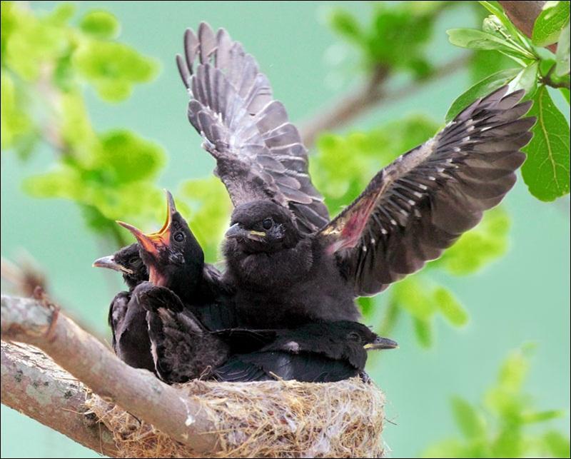 cute-baby-birds- (9)
