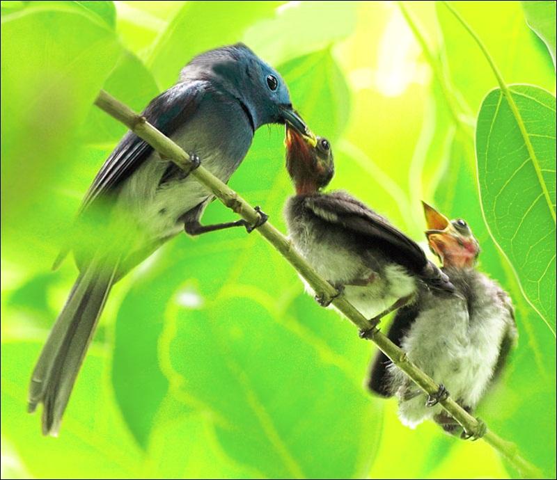 cute-baby-birds- (10)