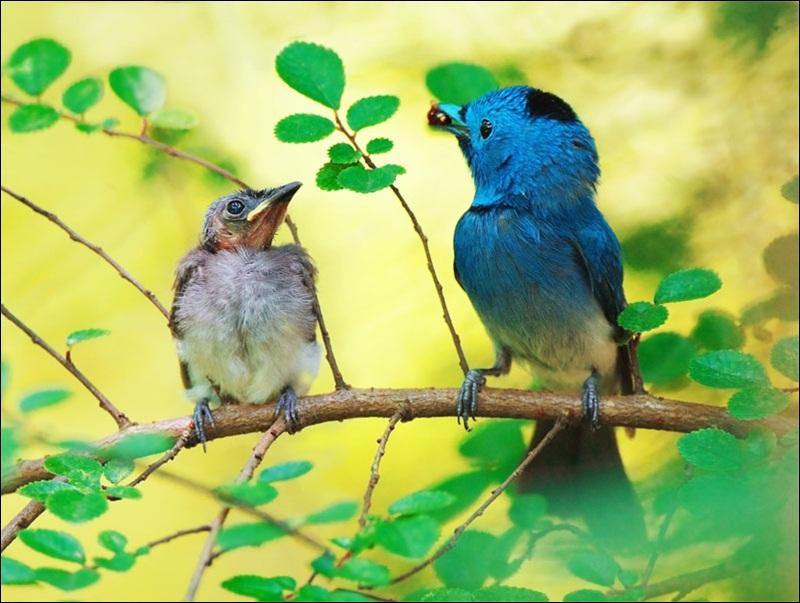 cute-baby-birds- (13)