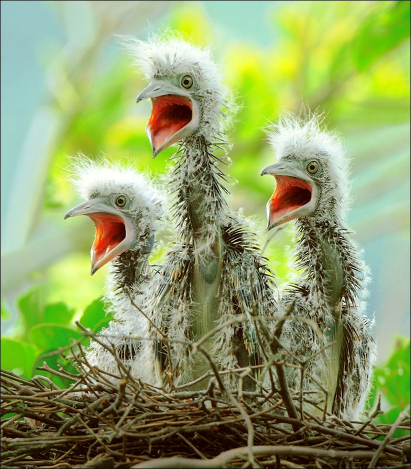 cute-baby-birds- (15)