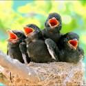 cute-baby-birds- (16)