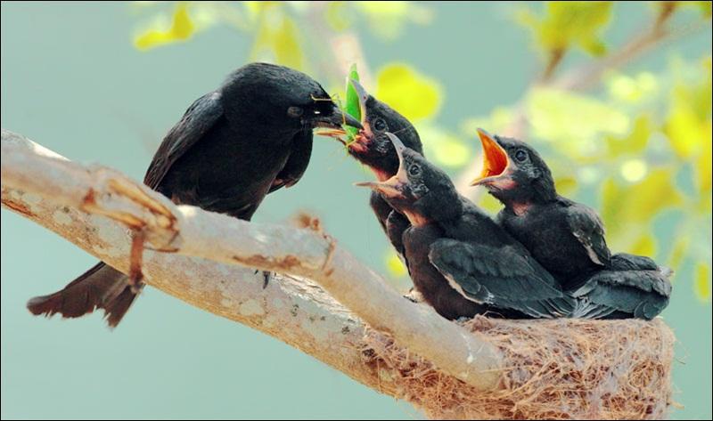 cute-baby-birds- (17)