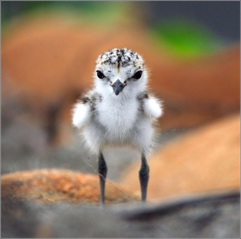 cute-baby-birds- (19)