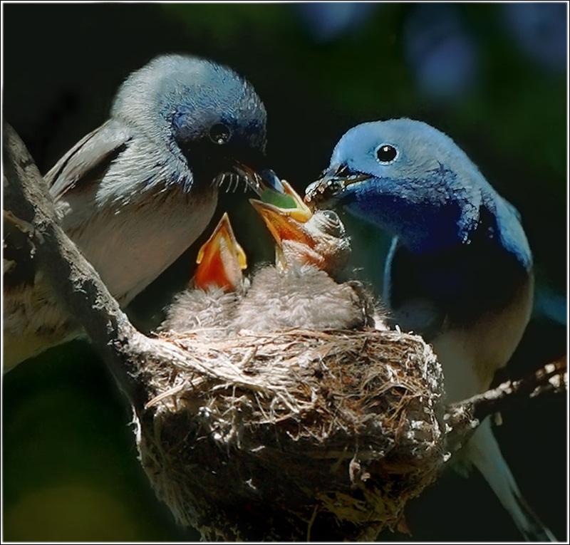 cute-baby-birds- (20)