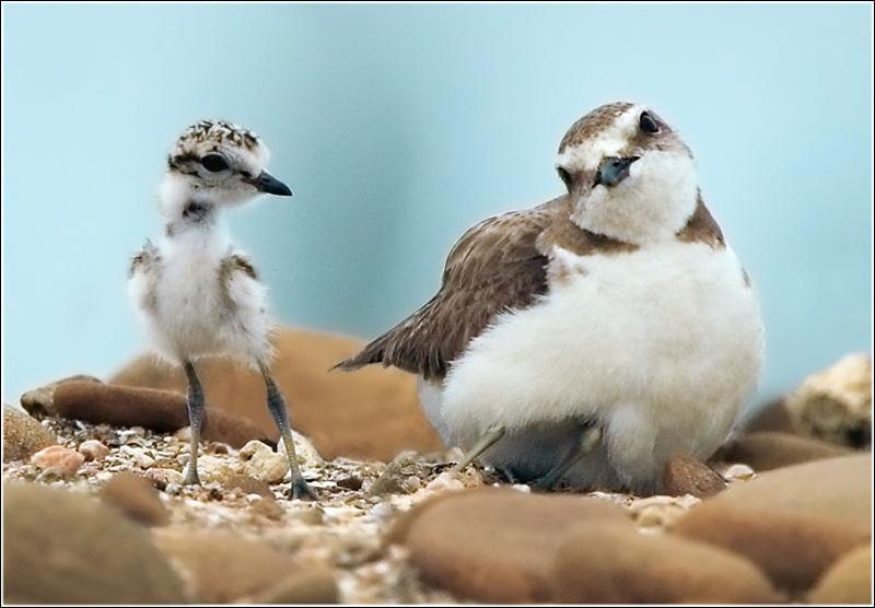 cute-baby-birds- (21)