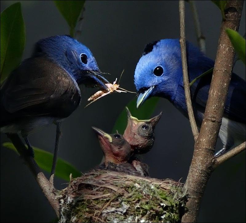 cute-baby-birds- (22)