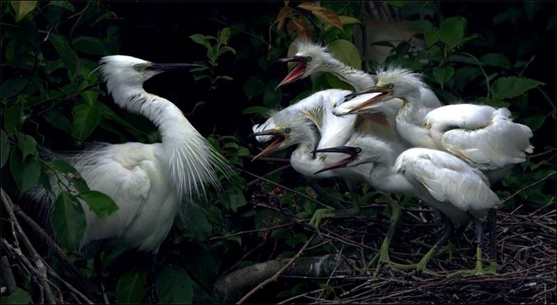 cute-baby-birds- (25)