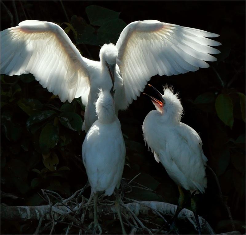 cute-baby-birds- (26)