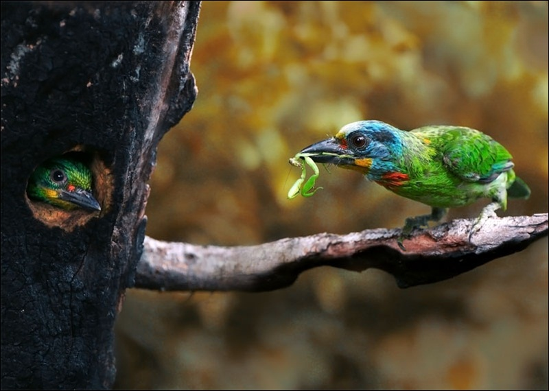 cute-baby-birds- (27)