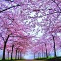 astonishing-beauty- (7)