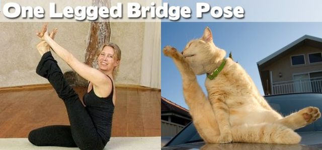 yoga-and-animals- (2)