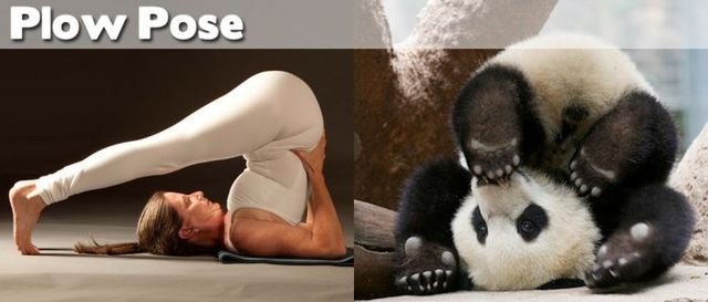 yoga-and-animals- (25)