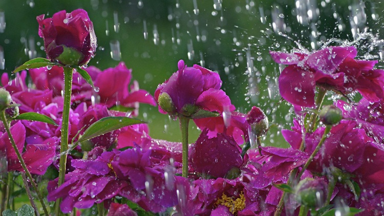 beautiful-rain-pictures-45-photos- (16)