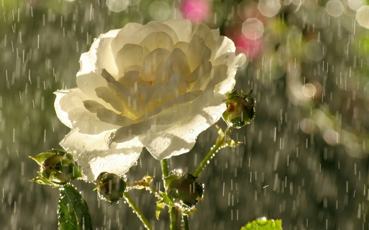 beautiful-rain-pictures-45-photos- (28)