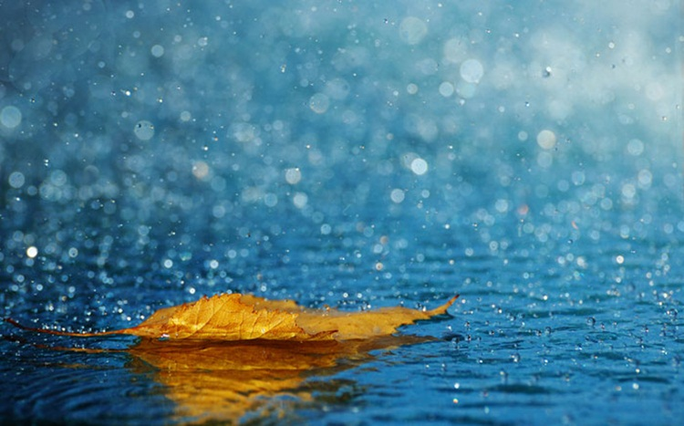 beautiful-rain-pictures-45-photos- (36)