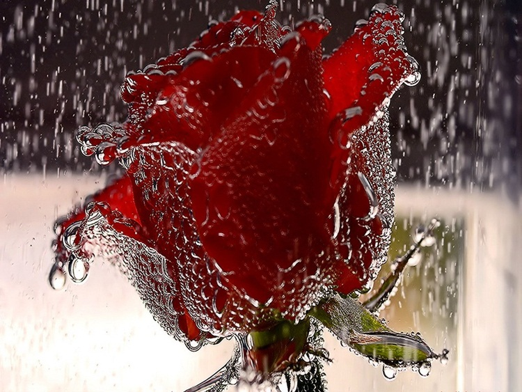 beautiful-rain-pictures-45-photos- (41)