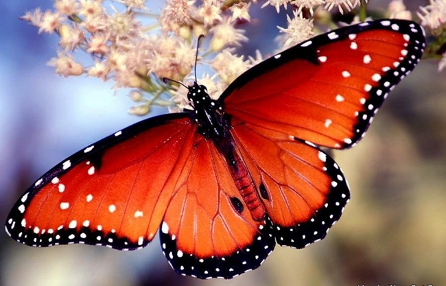 colorful-butterflies-26-photos- (4)