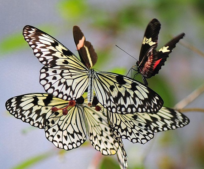 colorful-butterflies-26-photos- (5)