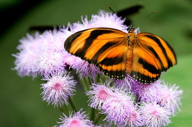 colorful-butterflies-26-photos- (8)