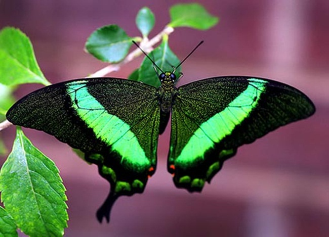 colorful-butterflies-26-photos- (10)